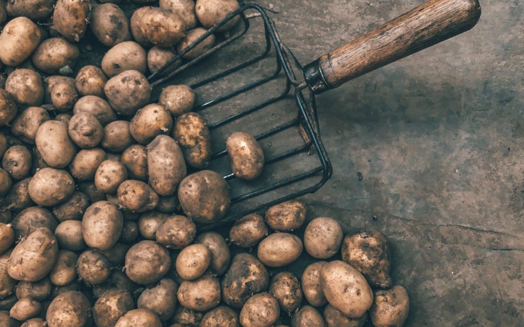 Potato With Savory Sauce